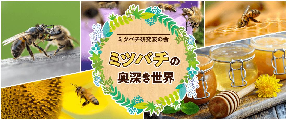 ミツバチの奥深き世界