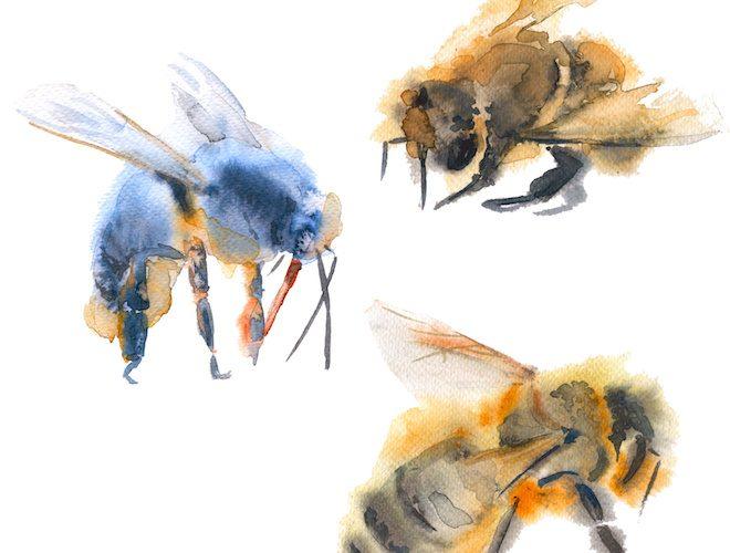 いろんなミツバチ