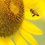 知るほどに魅力的!ミツバチの生態